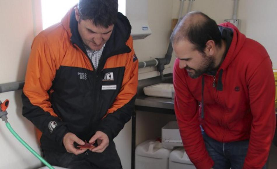 Miles Lamare, links, von der Universität von Otago und Antonio Garcia von der Universität Brüssel untersuchen Seesterne aus dem McMurdo Sound. (Bild: Antarctica New Zealand)