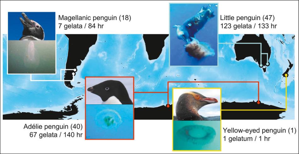 Die Karte der Brutgebiete der untersuchten Pinguinarten, die Anzahl Individuen und die Anzahl der Interaktionen mit den Gelata. Karte: ESA