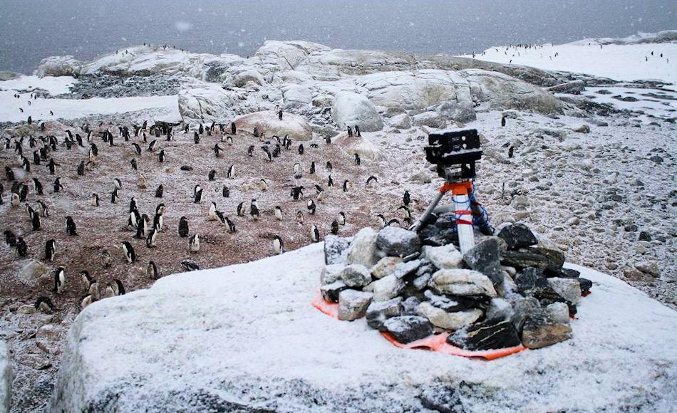 Ferngesteuerte und unabhängig operierende Kameras, wie diese auf Shirley Island, nahe der Station Casey, wurden benutzt, um die Zahl der Adéliepinguine in den Kolonien und das nahe Küsteneis zu beobachten. Kameras waren sowohl im Westen wie auch im Osten der Antarktis stationiert worden. Bild: Colin Southwell