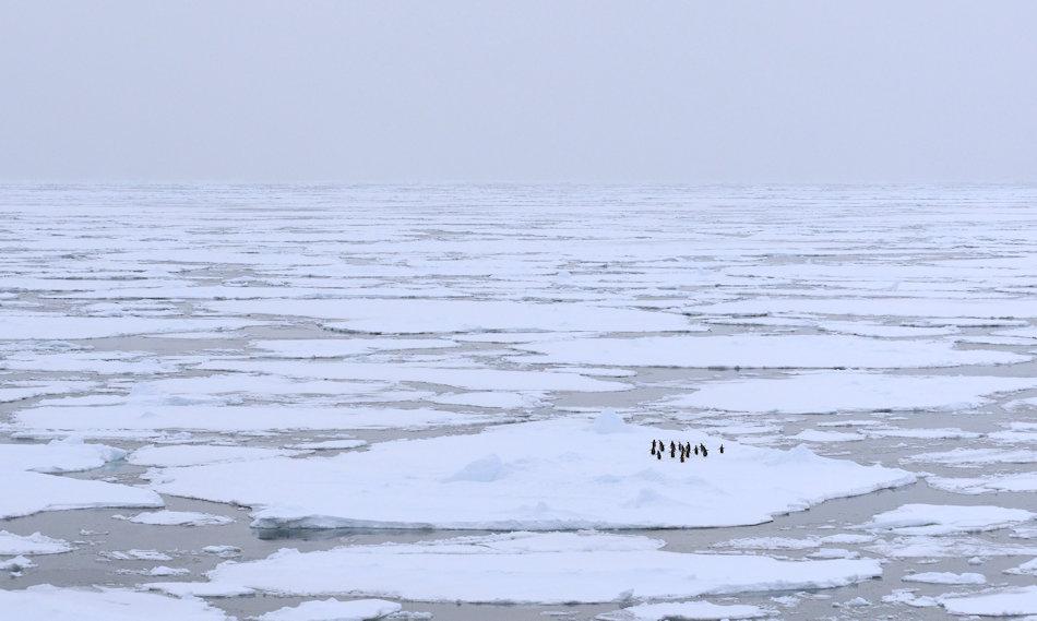 Das Packeis hält Antarktika während der Wintermonate fest im Griff und die klimatischen und physikalischen Bedingungen hatten bisher fast alle Arten von Forschung an der Packeiskante verhindert. Mit dem Einsatz von automatisch gesteuerten Robotern erhalten die Wissenschaftler wertvolle Daten. Bild: Michael Wenger