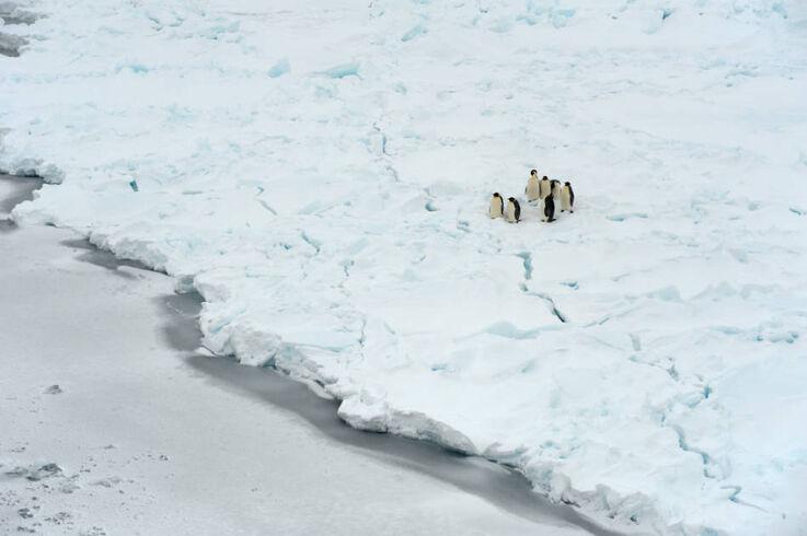 Etwa 14'000 verschiedene Tierarten leben im Weddellmeer – doch der Schutz des Weddellmeeres