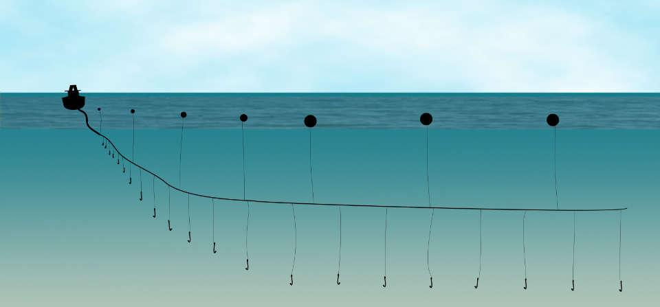 longline