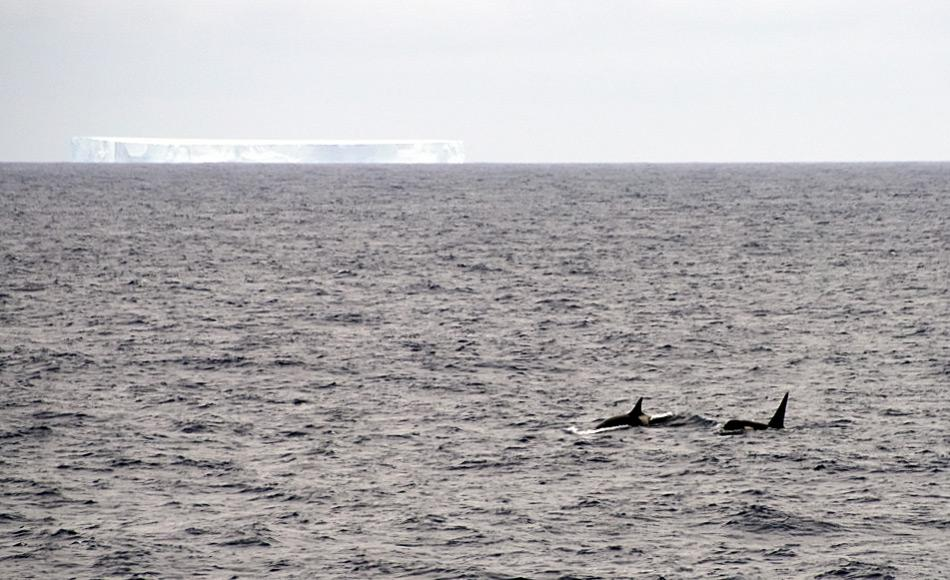 Das Südpolarmeer beinhaltet die Wassermassen rund um Antarktika. Seine nördliche Grenze ist die antarktische Konvergenzlinie und umfasst den Atlantik, den indischen und den pazifischen Ozean. Forscher halten es für das produktivste Meeresgebiet der Erde und es ist die Heimat von unzähligen Tieren wie beispielsweise Orcas. Bild: Michael Wenger