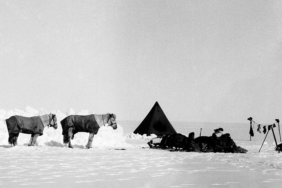 Während Amundsen vollumfänglich auf Skis und Hunde setzte, war Scott davon überzeugt, Motoschlitten und Ponys einsetzen zu wollen. Dies stellte sich als grosser Fehler heraus.