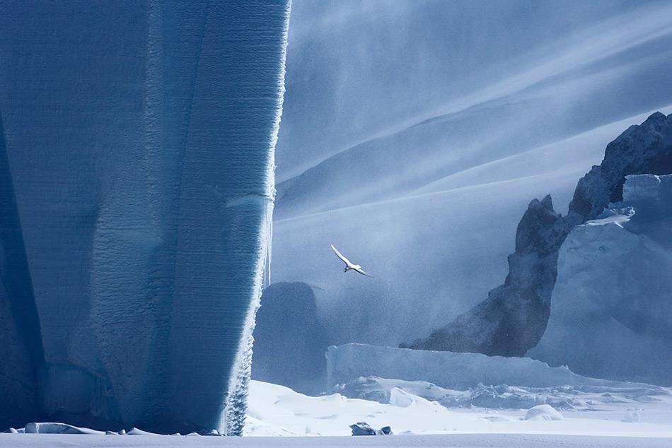 Antarktis Vogel und Eisberg