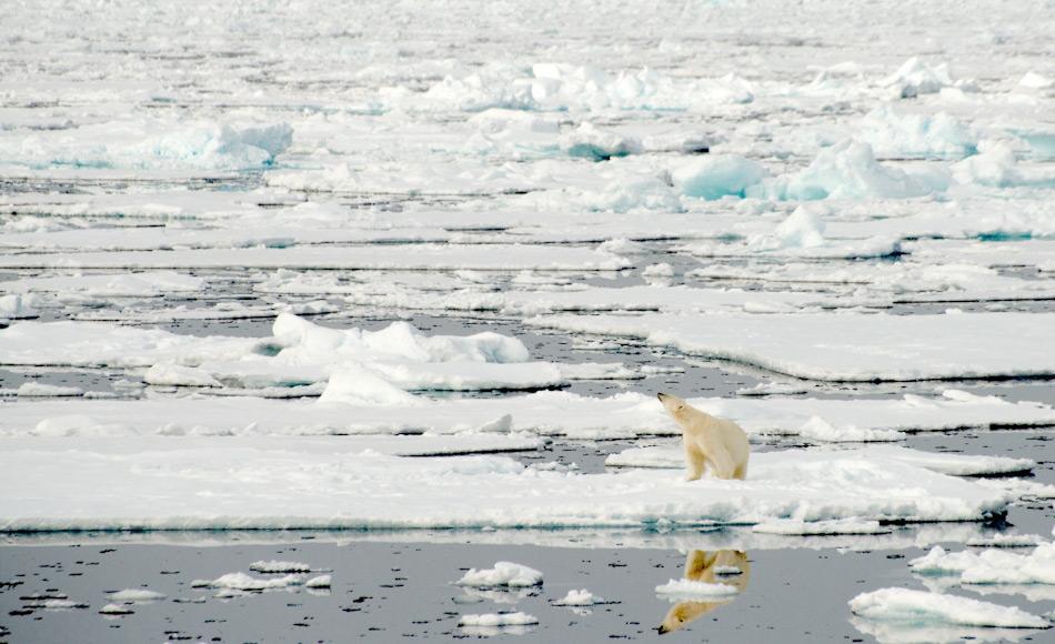 Das Meereis stellt den wichtigsten Lebensraum im Arktischen Ozean dar. Fast alle grösseren tierischen Arktisbewohner wie beispielsweise Eisbären, leben an der Eiskante und finden dort ihre Nahrung. Bild Michael Wenger