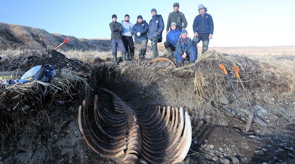 Die Forscher, die die Überreste der Seekuh ausgegraben hatten, waren von der Qualität der Knochen überrascht. Die meisten sahen aus, als ob das Tier erst kürzlich verstorben war. Bild: Ministerium für natürliche Ressourcen und Ökologie