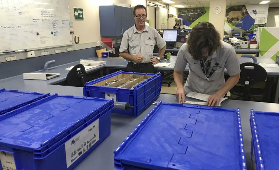 Biosicherheitsbeamte untersuchen Samen aus australischen Genbanken, bevor sie in den weltweiten Saatgut-Tresor in Spitzbergen geschickt werden. (Bild: ABC News, Kerry Straight)