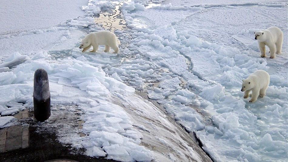 Dürfte bald zum Normalfall gehören - Eisbärenbegegnung mit einem russischen U-Boot im Packeis der Arktis.